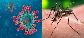 Hasta este sábado en Chaco hay 421 casos de coronavirus y 2104 de dengue