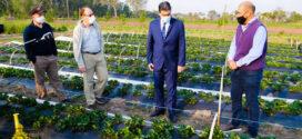 Makallé: el intendente Marcelo Angione y el gobernador Jorge M. Capitanich visitaron establecimiento de producción de frutillas