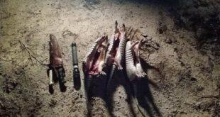 La Verde: Policía Rural incauta animales faenados y detienen a tres personas